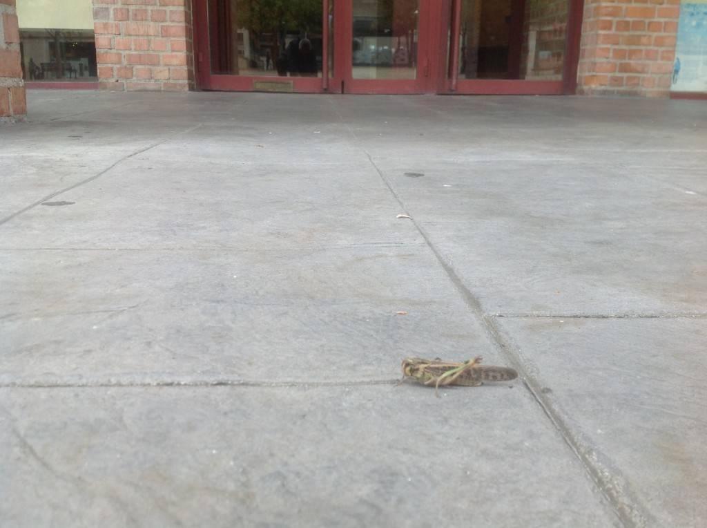 La langosta en la puerta del Ayuntamiento de Barañáin