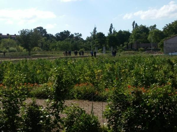 El ayuntamiento de pamplona presenta un proyecto de for Jardineria navarro