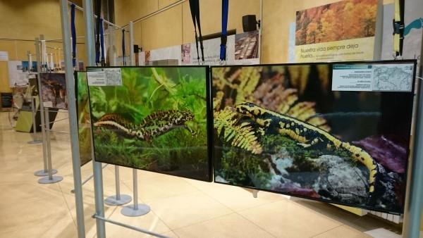 anfibios_museo_educacion_ambiental_2