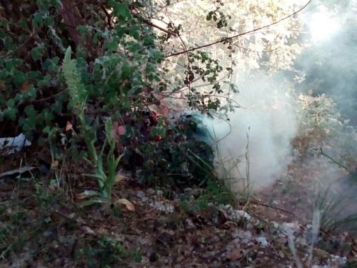 Incendio en Sarriguren por la pelusa de los chopos