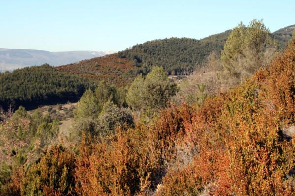 monte_ezkaba_panoramica